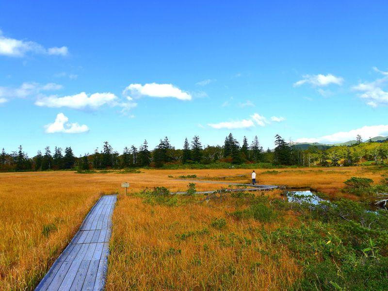 ニセコ「神仙沼」紅葉ハイキングが神秘的!アクセスと見頃ガイド