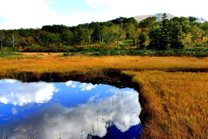 秋色遊歩道を散策!黄金絨毯はまるでジブリ・ナウシカの世界!
