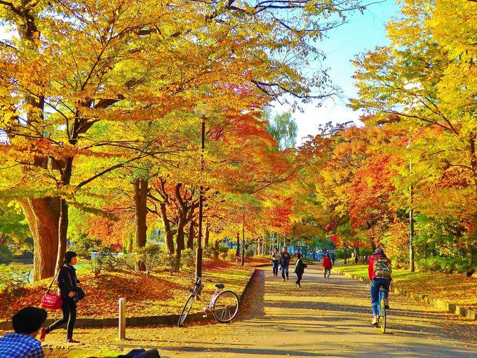 中島公園のアクセスと紅葉の見頃