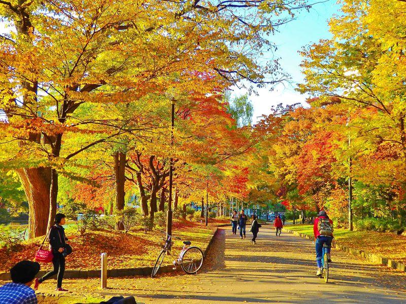 札幌のカラフル紅葉シャワー!「中島公園」の見頃の時期は?