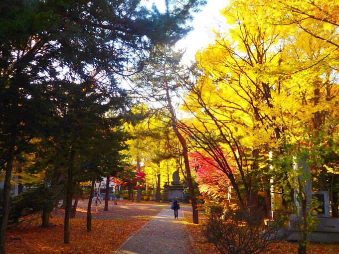 中島公園周辺に隣接!「護国神社」と「弥彦神社」