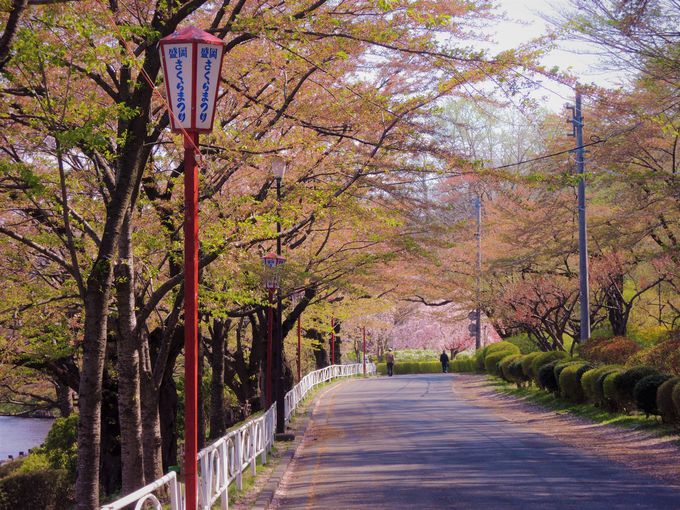 まるで桃源郷!緑と桜と水のオアシス