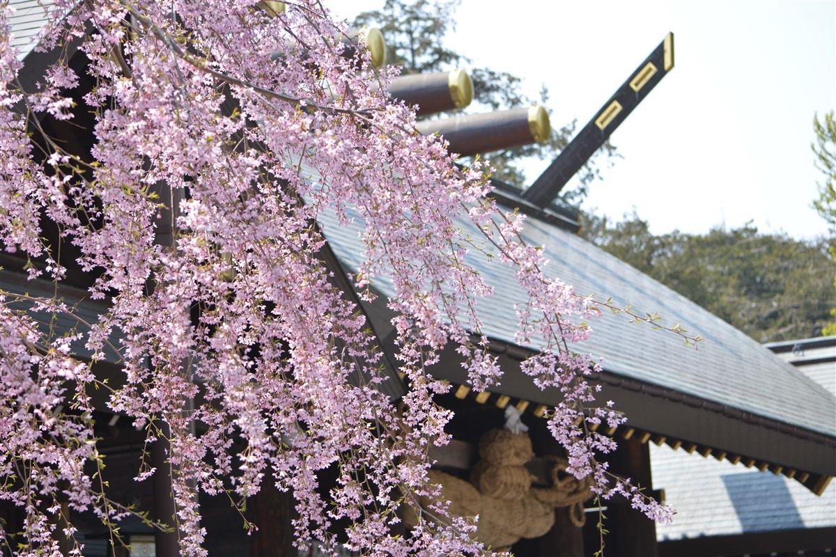 札幌で「ジンパ」!お花見スポット円山公園・北海道神宮が人気な理由