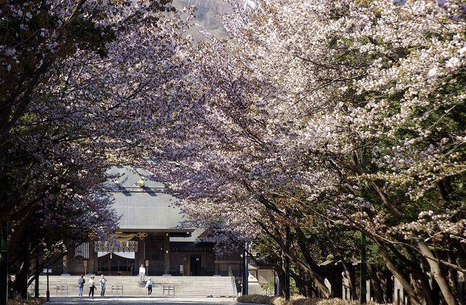 お花以外にも押さえておきたい「神宮」と「円山公園」のポイント