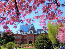 札幌駅から徒歩10分。赤れんが庁舎で楽しめるお花見とライトアップ