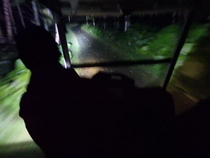 動物にあえなくても面白い!?アトラクション気分で探検できるカート運転