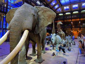 パリは博物館もオシャレ!「進化大陳列館」動物展示のセンスに釘付け