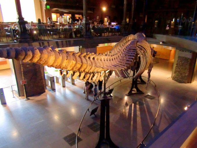 入口にはクジラの超巨大骨格が!頭上に見える展示をあらゆる方向から!