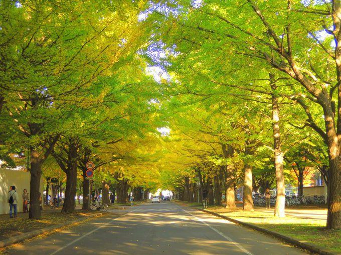 広大なキャンパスには見どころいっぱい「北海道大学」
