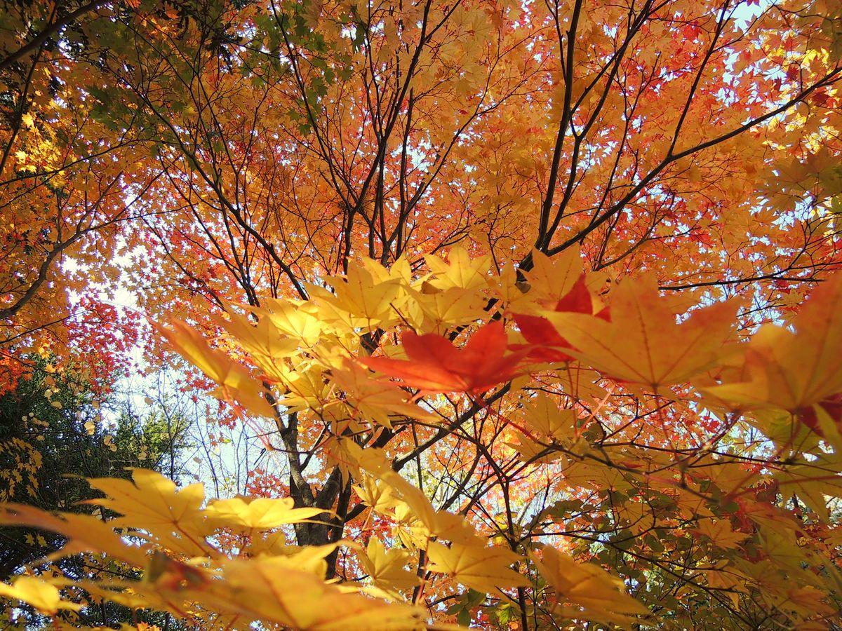 紅葉狩りにピクニック!自然が満喫できる野外美術館の楽しみ方