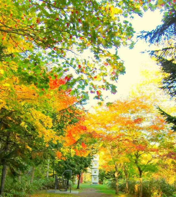 紅葉の中で作品巡り!アートな秋は運動の秋?