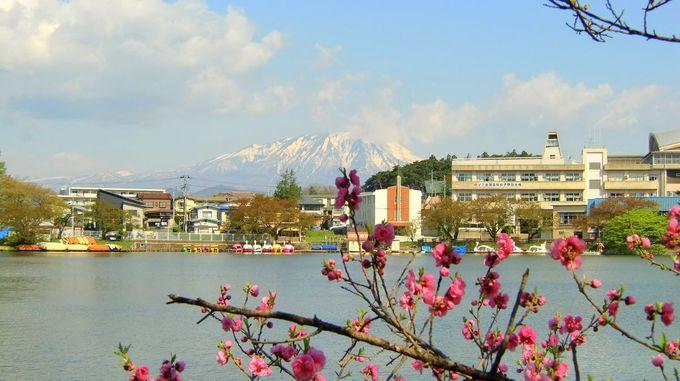 盛岡市のお花見スポットと岩手山を望む美しい池