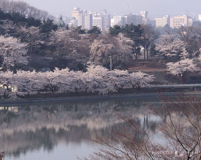 市民のお花見スポットは観光の超穴場「高松公園(高松の池)」