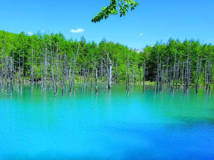 「青い池」なのに青くない?