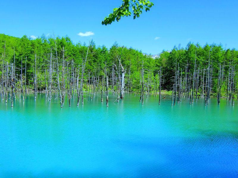 美瑛・ココをおさえたい!青くない「青い池」と進化するB級グルメ「美瑛カレーうどん」