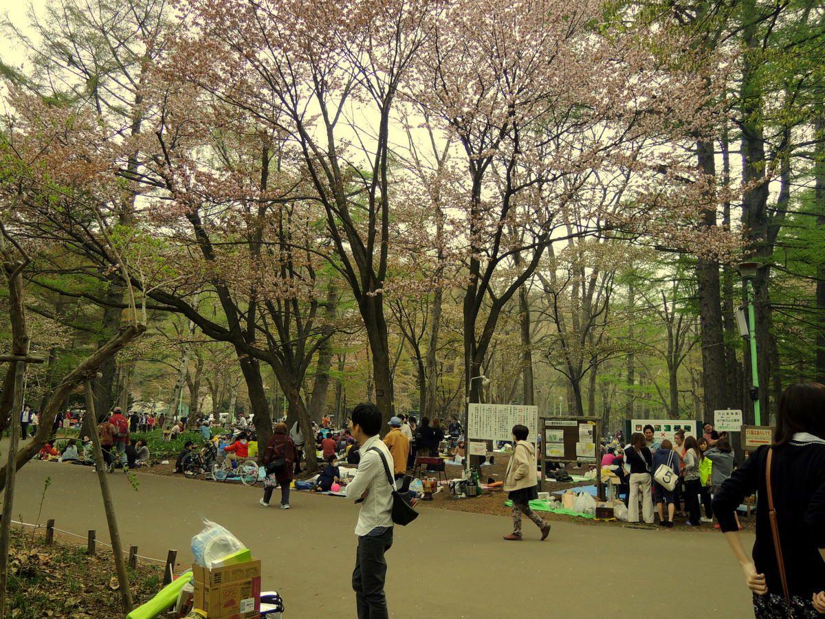 円山公園で火気利用可能なのはお花見シーズンだけ!