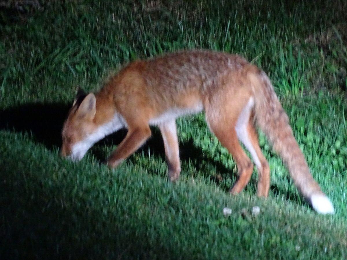 こんなに近くに寄ってきた!そっと見守ることで知る動物たちの生態