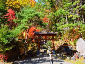 「紅桜公園」は札幌穴場の紅葉名所!25,000坪の秋絶景