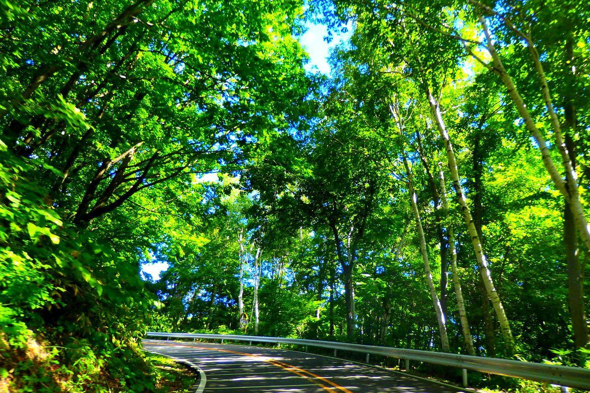 札幌の自然と街並みを楽しむ木漏れ日ドライブ