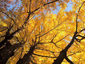 一足お先に秋満喫!時間とタイプで選ぶ札幌の紅葉狩り5選