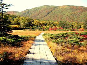 神宿る!?ニセコ「神仙沼」秋の散策は雲海も紅葉も楽しめる!