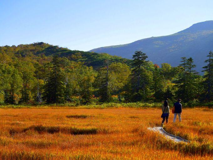 「神仙沼」の紅葉の見頃と散策時の注意点