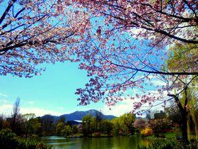 ここはNYのセントラルパーク!?札幌・中島公園の新緑と桜色の春