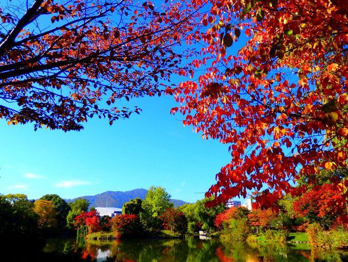 ボート遊びも!秋の札幌観光は「中島公園」で紅葉狩りができる