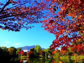 秋絶景は街中に!札幌駅から5分「中島公園」の紅葉シャワーが超カラフル