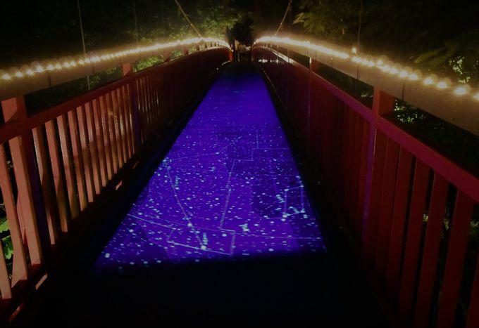 「二見吊橋」で光と遊ぶ〜夜の紅葉狩り〜