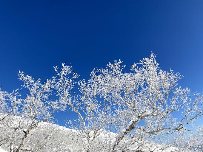 青空と霧氷のコントラストが美しい!日中の「霧氷テラス」