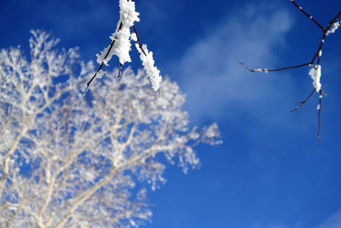 冬の間「雲海テラス」は「霧氷テラス」に