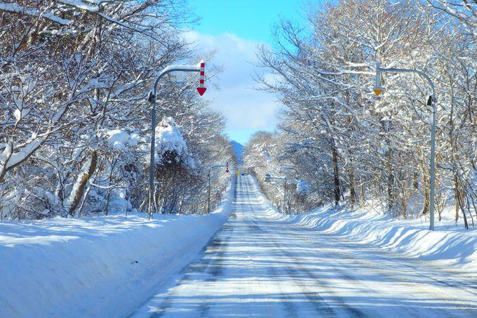 冬の道道16号支笏湖通りは「霧氷ロード」に。