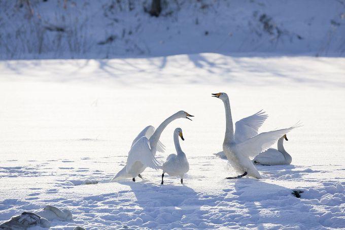 道道16号線の先に待つ冬の支笏湖も美しい