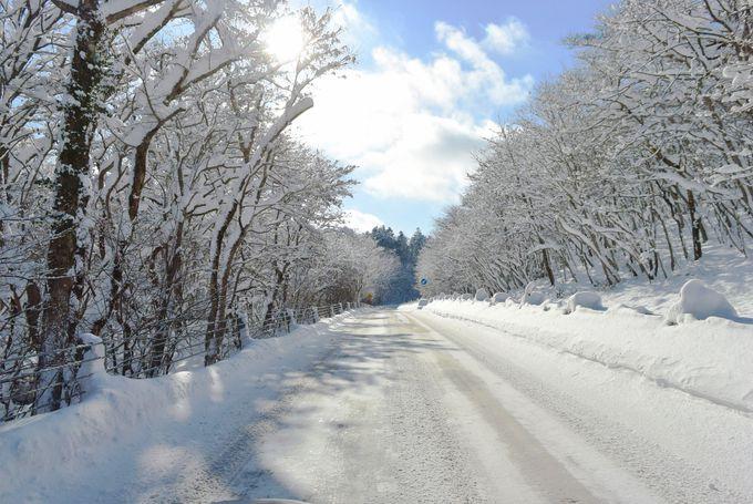 9年連続日本一の水質を誇る支笏湖の冬は「道」がスゴイ!?