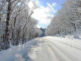 「アナ雪」の世界みたいな「霧氷ロード」道道16号 支笏湖への道が美しい
