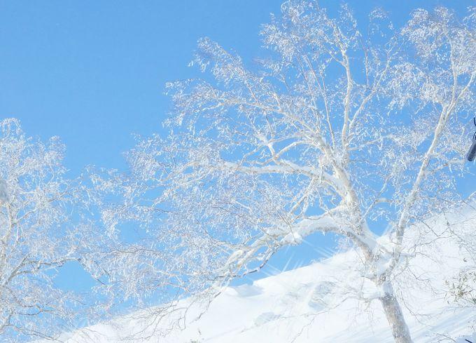 冬山リゾートの景色とアクティビティ、グルメを体験!