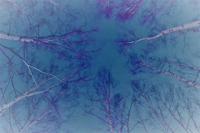 「氷の露天風呂」で体験できる景色