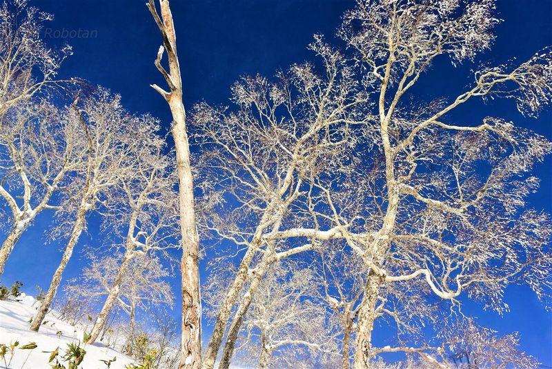 星野リゾート トマムの冬で必見の雪景色