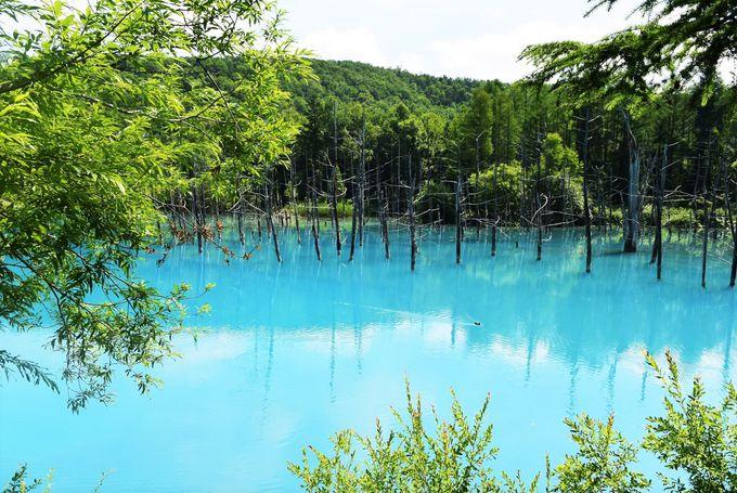 旭川〜トマムまでの絶景を楽しむ旅もオススメ!