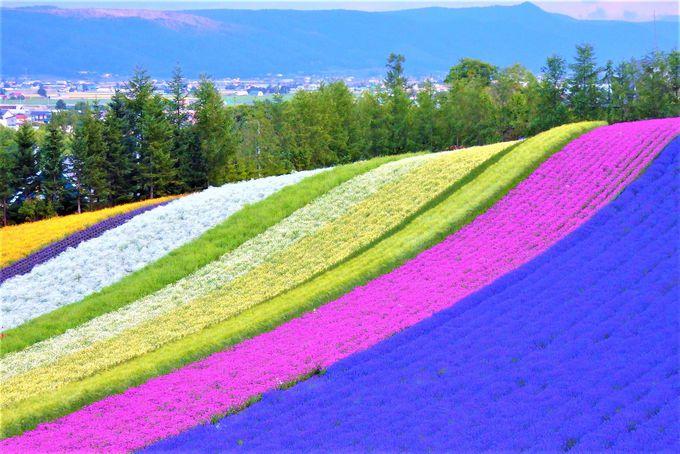 2日目:富良野といえば「ファーム富田」のラベンダー