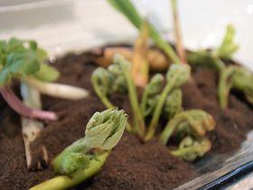 フォトジェニック!星野リゾート トマム「ワイルドハーブランチ」はまだ春が体験できる!