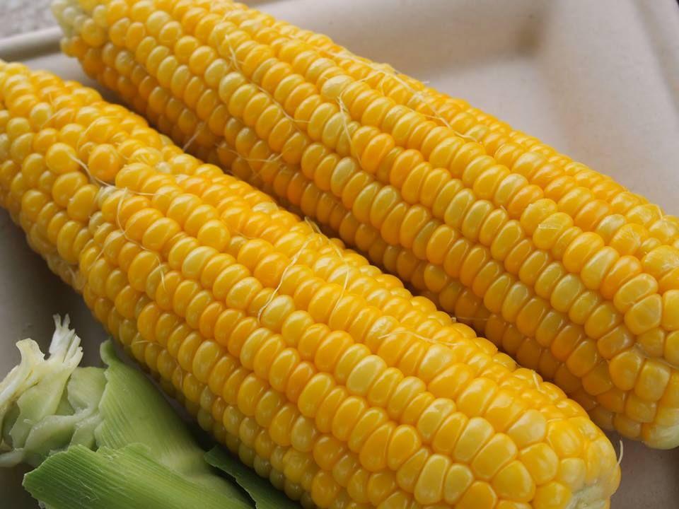 出来立て、収穫したてを食べるランチツアーも開催。身近にある十勝