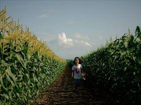 食料自給率1200%!十勝「いただきますカンパニー」絶景畑体験は自由研究にもおすすめ