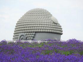 札幌「滝野霊園」は穴場の新名所!大仏がラベンダーからひょっこり