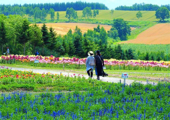 「リゾートイン・ノースカントリー」は富良野観光の拠点に