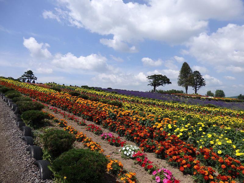 7月、8月、9月は特におすすめ!美瑛の花畑「ぜるぶの丘」