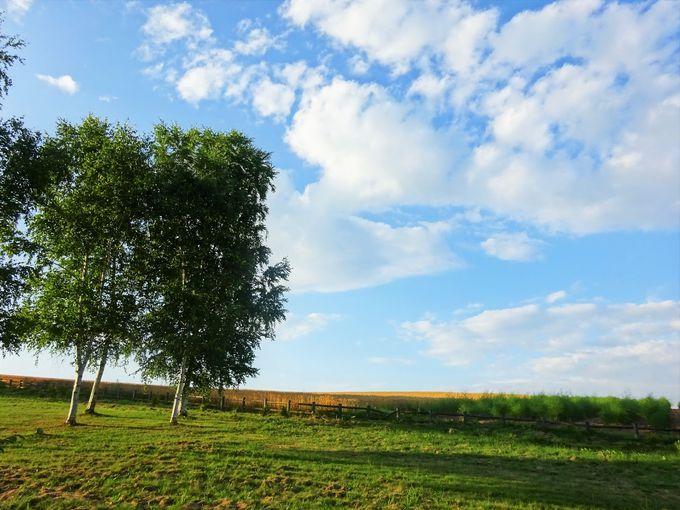 ケンとメリーの木を楽しむ隠れスポット!「ぜるぶの丘」から「パッチワークの丘」も楽しめる!