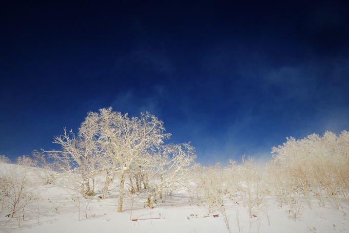 紺碧の空に雪のキラメキ、パウダースノーを体験!