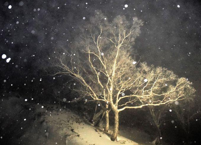 神秘的な氷と雪の霧氷テラス!夜のライトアップも
